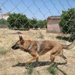Escrementi del rifugio dei cani in una fossa nel terreno, rischio inquinamento a Ilbono