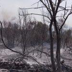 Un piano di rilancio per i territori colpiti dagli incendi, l'appello di Coldiretti